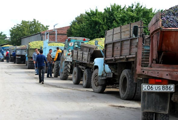 Grape-growers wait in line at a wine plant in Kaghtsrashen, Armenia, hoping to sell their produce. (Photo: Gayane Mirzoyan/courtesy of Chai Khana.org)