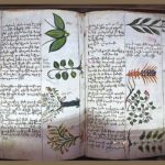 A page from fifteenth century Armenian physician Amirdovlat Amasiatsi's botanical encyclopedia, Useless for the Ignorant, housed in Matanadaran. (Photo courtesy of Wikiwand)